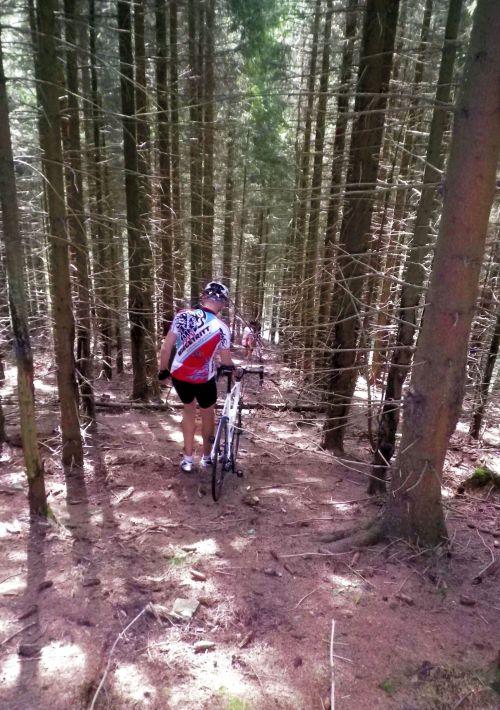 1209 Harz richtig im Wald