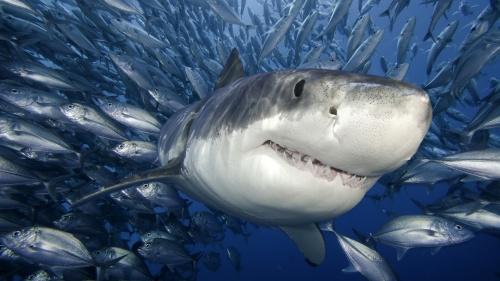 2013-08-06-shark