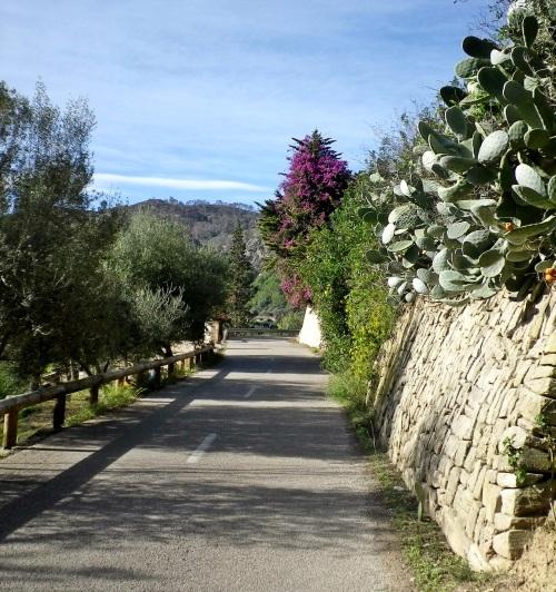 1412 Mallorca Winter Training Last Day 13