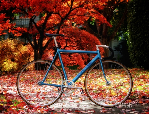 cannondale-track-in-fall